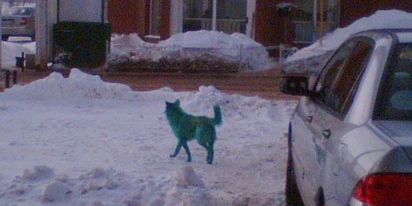 Здесь фото зеленой собаки