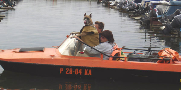 собака- капитан
