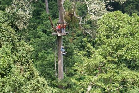 Под нами тропический лес
